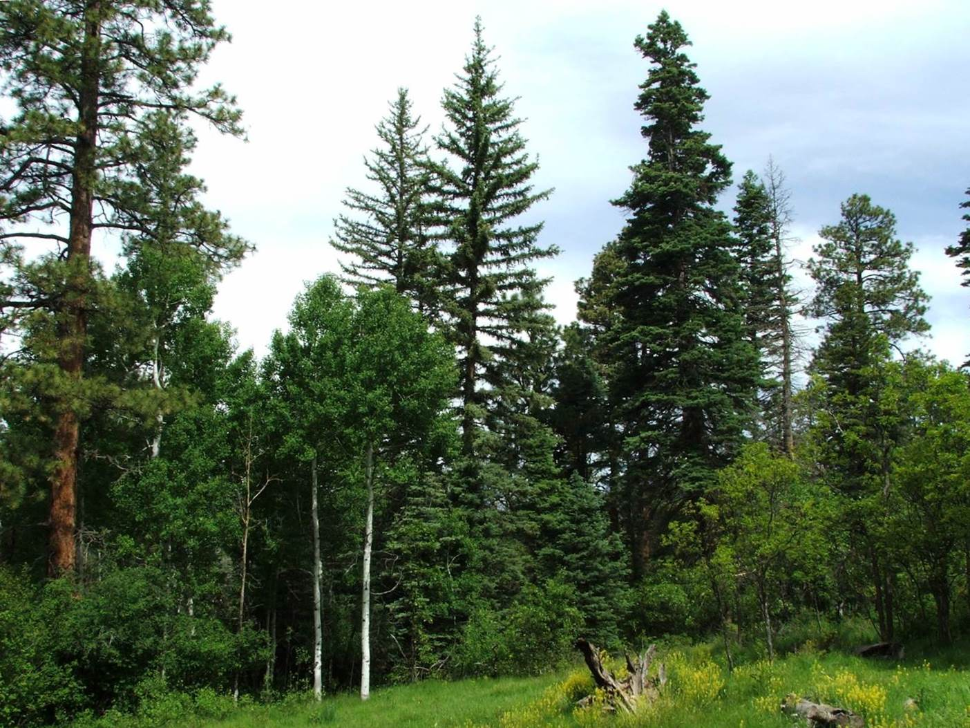 The San Juan National Forest ASCC site is a dry mixed-conifer forest type located in southwest Colorado.