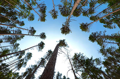 Transition canopy density. Photo Credit: Jacob Muller, University of Minnesota