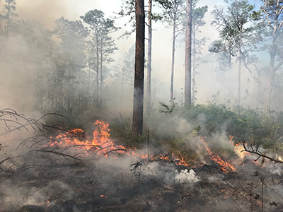 Prescribed fire in the ASCC Transition plot at The Jones Center; Photo Credit: Seth Bigelow, Joseph W. Jones Ecological Research Center at Ichauway