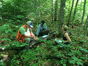Which approach best prepares forest ecosystems for climate change adaptation?